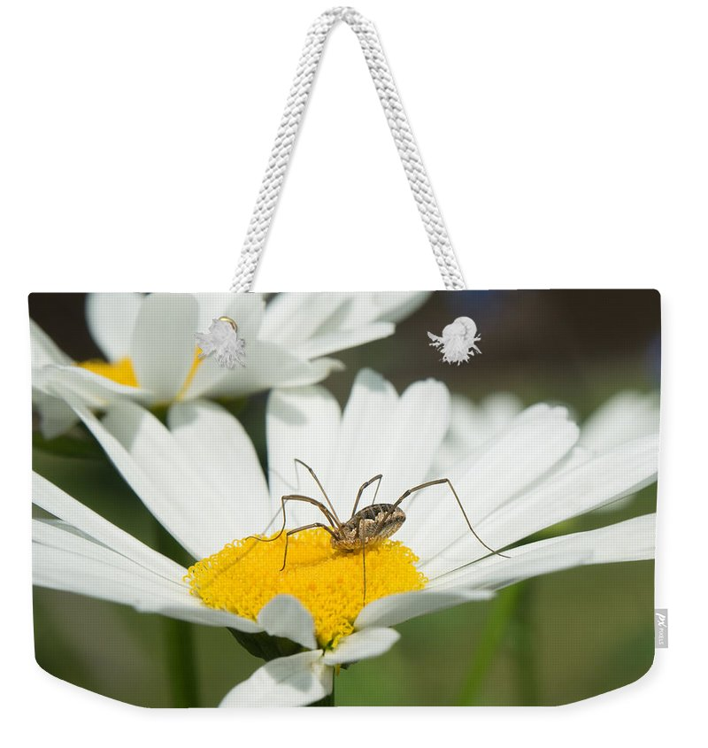 Alberta Weekender Tote Bag featuring the photograph Harvastman On Daisy Looking For Food by Douglas Barnett
