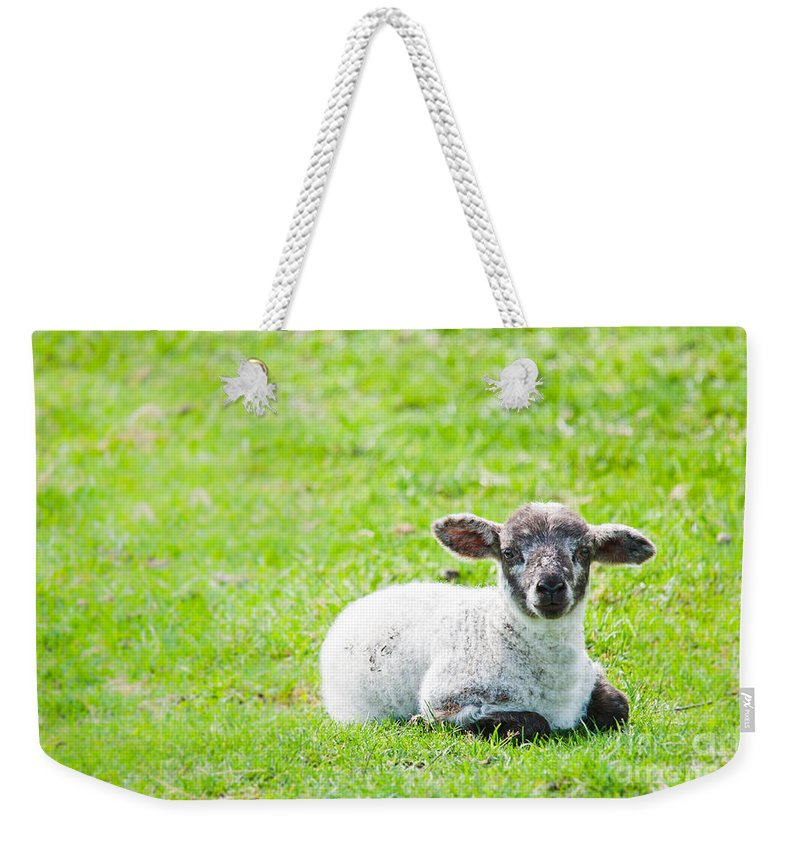 Sheep Weekender Tote Bag featuring the photograph Have You Any Wool by Cheryl Baxter