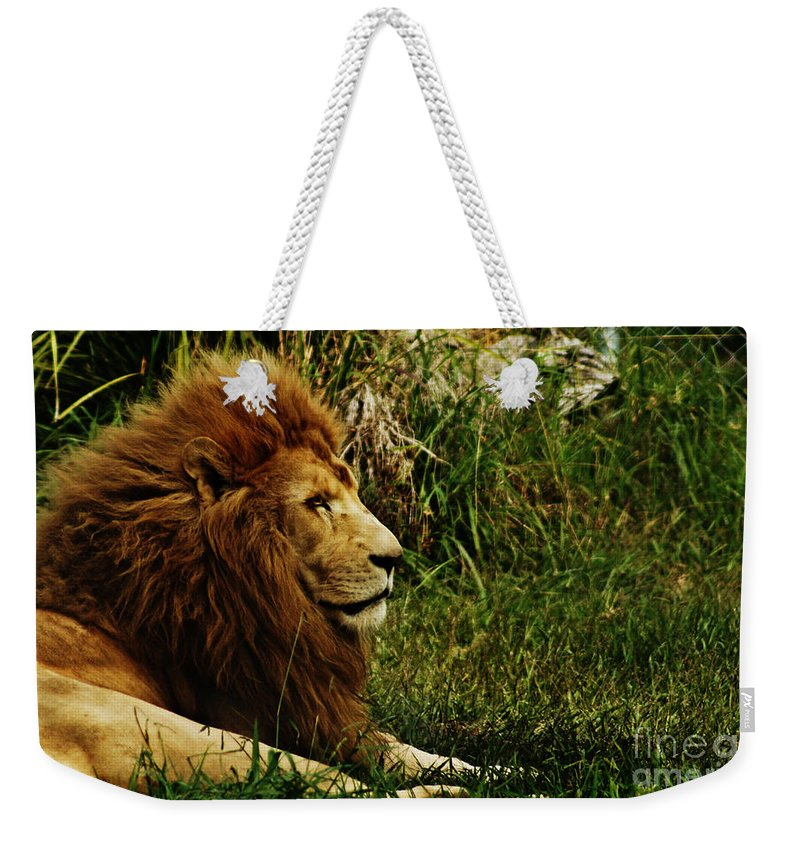 Lion Weekender Tote Bag featuring the photograph Having A Break by Ben Yassa