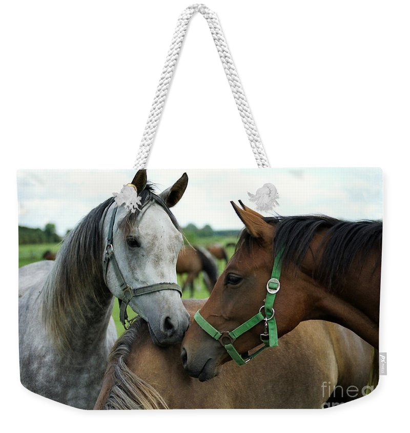 Horse Weekender Tote Bag featuring the photograph Having A Chat by Angel Tarantella