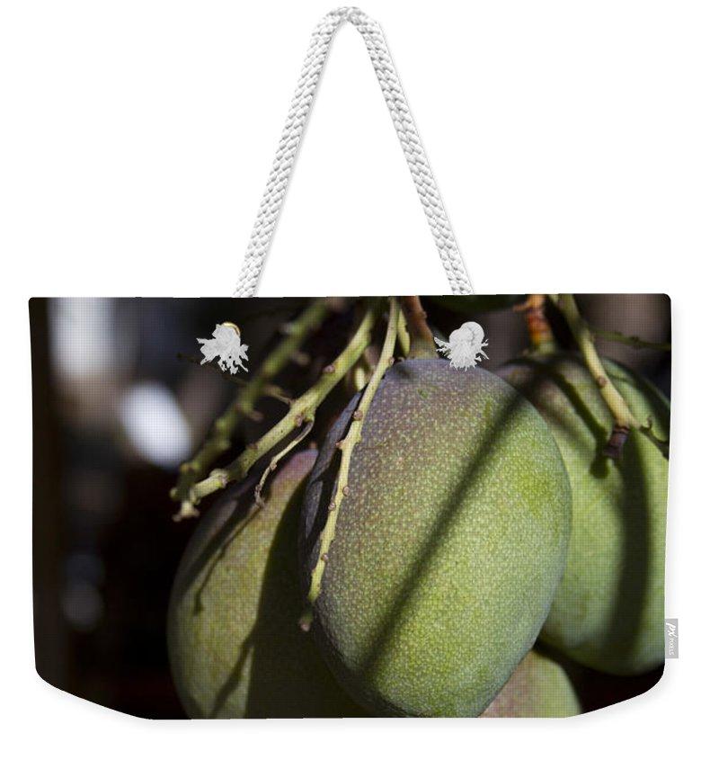 Aloha Weekender Tote Bag featuring the photograph Hawaiian Mango Kihei Maui Hawaii by Sharon Mau