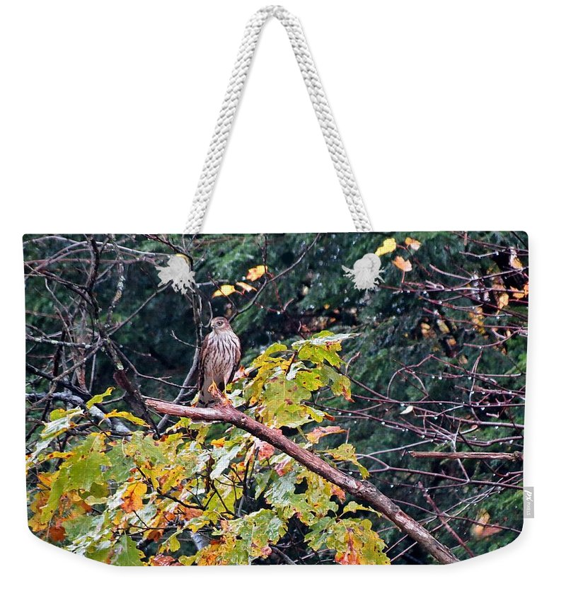 Weekender Tote Bag featuring the photograph Hawk On A Limb by MTBobbins Photography