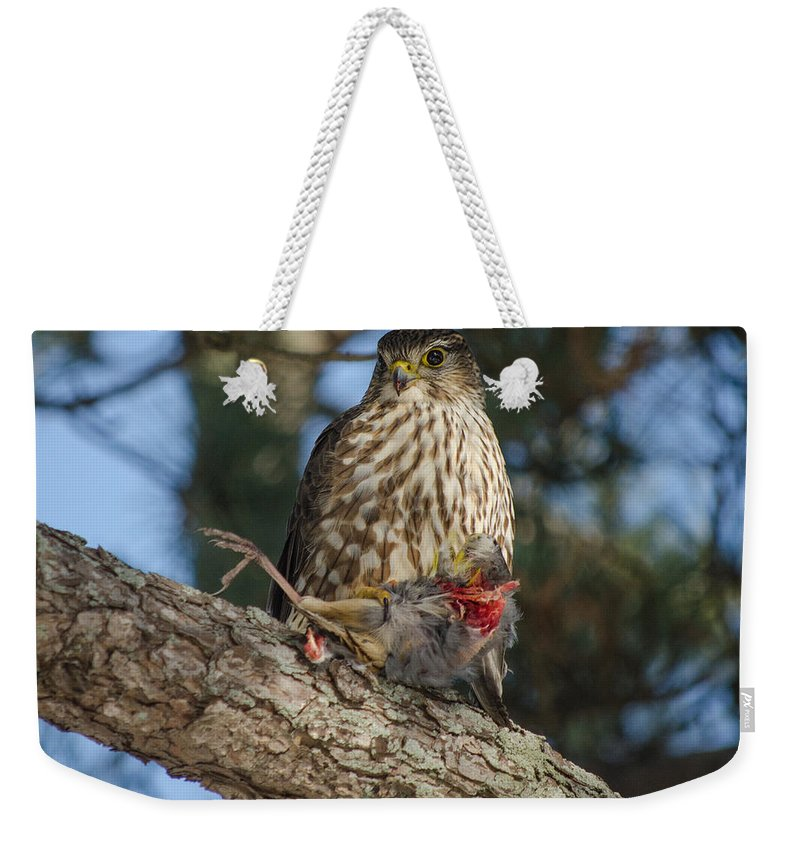 Nature Weekender Tote Bag featuring the photograph Hawk With Prey by Neil Taitel