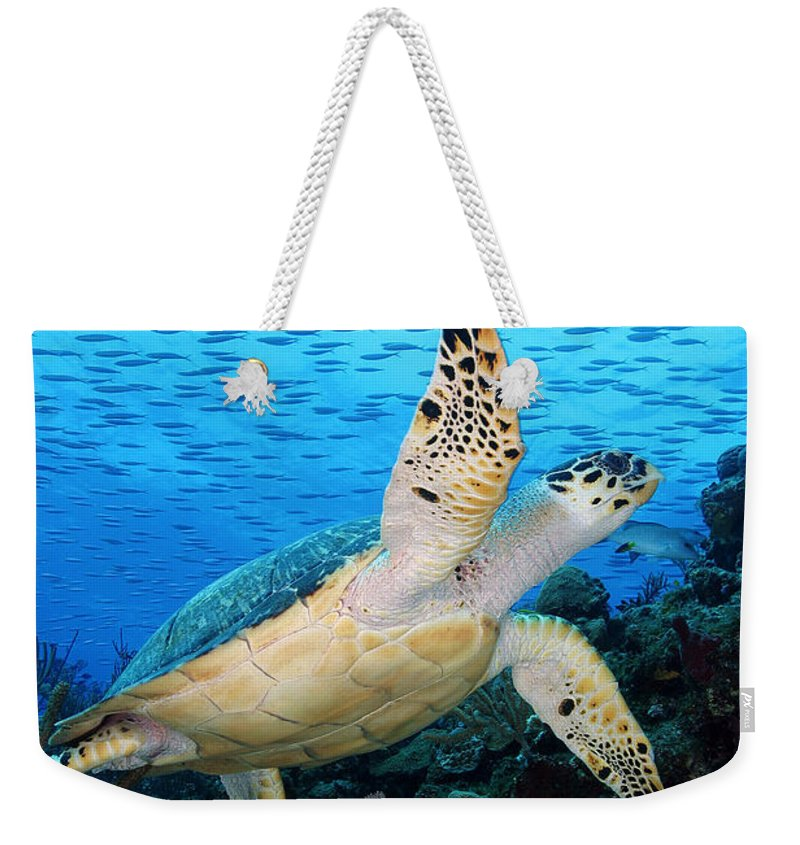 Turtle Weekender Tote Bag featuring the photograph Hawksbill On Eldorado by Carey Chen