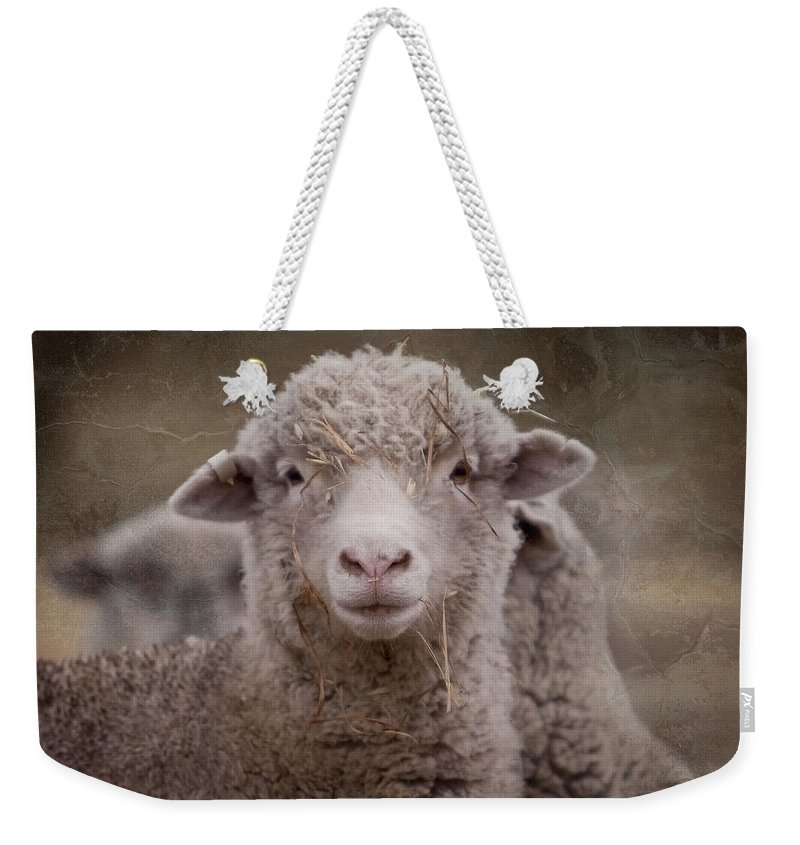 Sheep Weekender Tote Bag featuring the photograph Hay Ewe by Michelle Wrighton