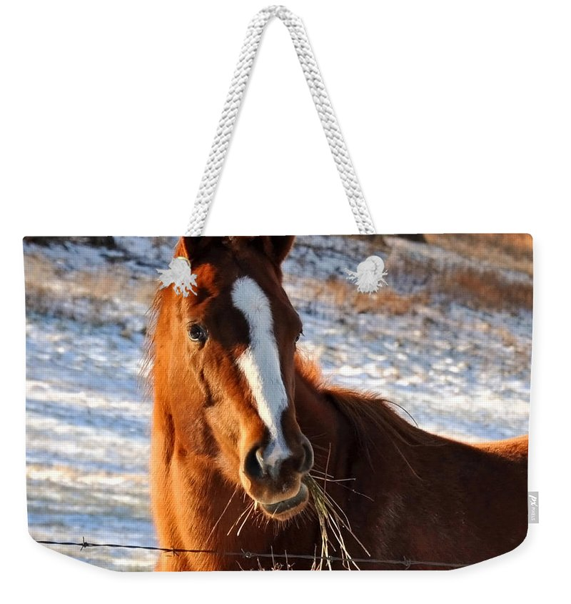 Nature Weekender Tote Bag featuring the photograph Hay There by Nava Thompson