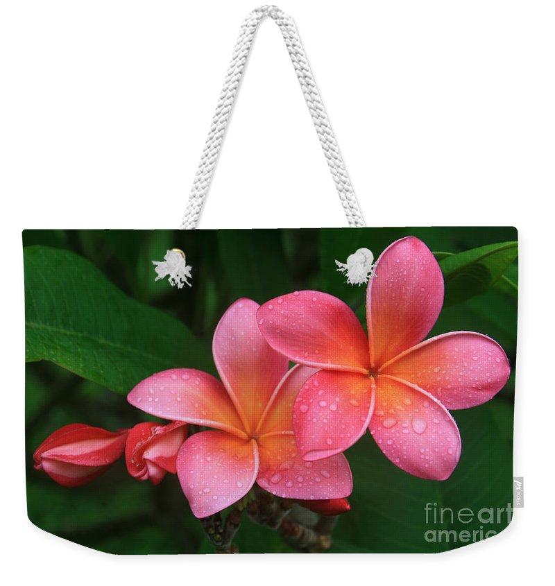 Pink Plumeria Weekender Tote Bag featuring the photograph He Pua Laha Ole Hau Oli Hau Oli Oli Pua Melia Hae Maui Hawaii Tropical Plumeria by Sharon Mau