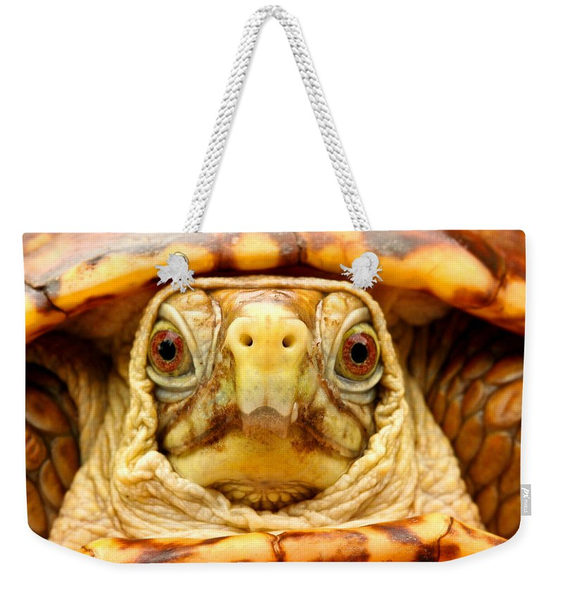 Animals Weekender Tote Bag featuring the photograph Head Shot by Jean Noren