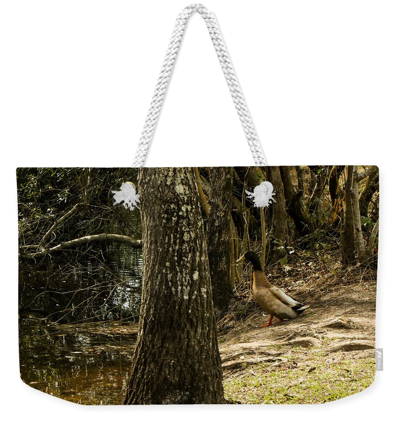 River Ducks Weekender Tote Bag featuring the photograph Headed For The River by Mechala Matthews