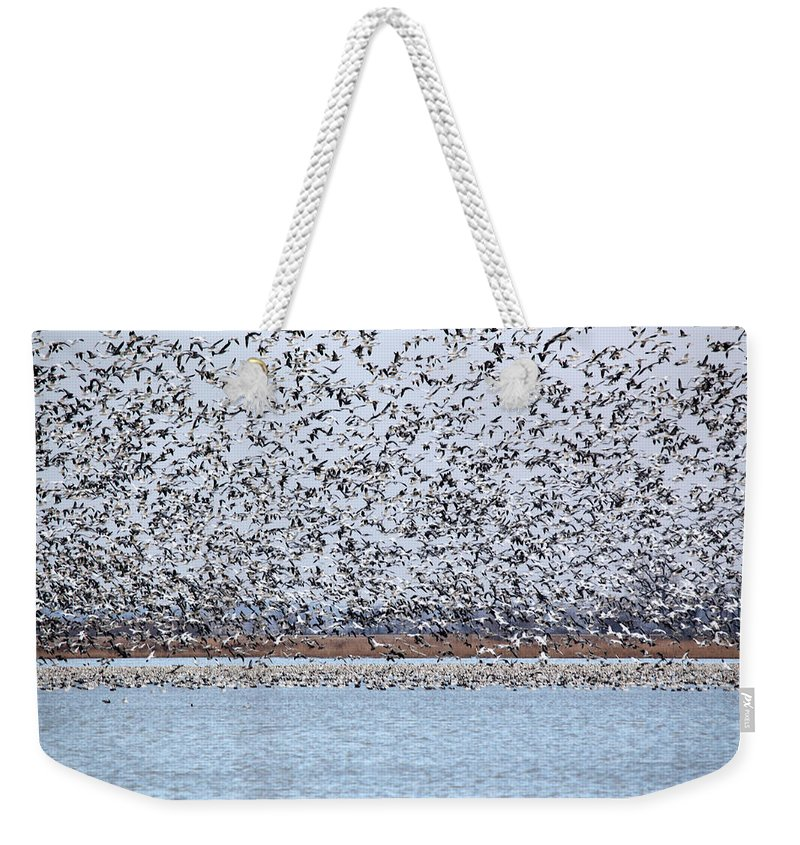 Geese Weekender Tote Bag featuring the photograph Heading North by Lynn Sprowl