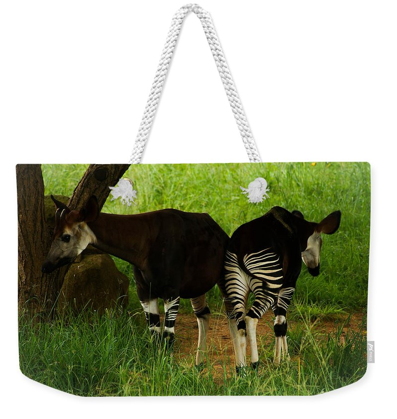 Okapi Weekender Tote Bag featuring the photograph Heads And Tails by Tracey Beer