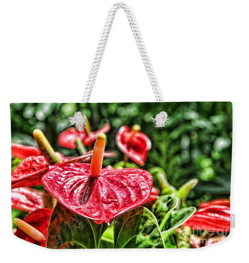 Anthurium Weekender Tote Bag featuring the photograph Heart Of Hawaii By Diana Sainz by Diana Raquel Sainz