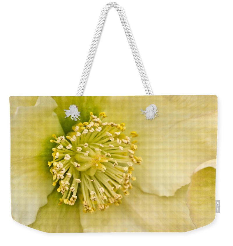 Helleborus Weekender Tote Bag featuring the photograph Heleborus 2 by Douglas Barnett