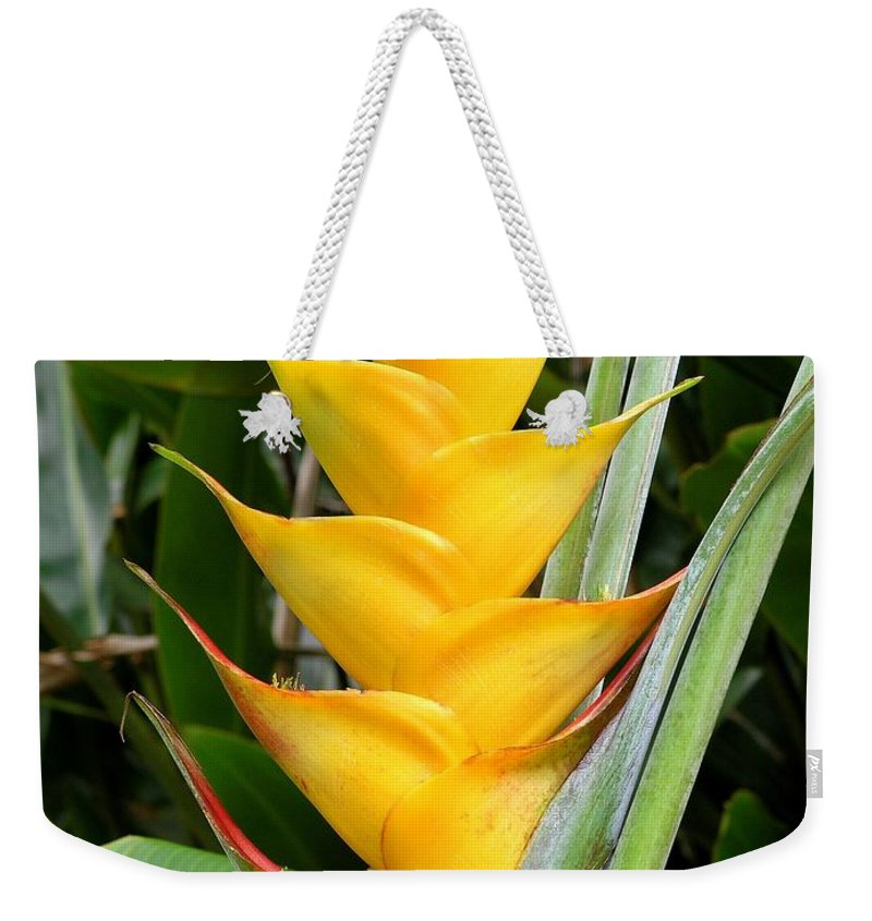 Heliconia Caribea Weekender Tote Bag featuring the photograph Heliconia Caribea by Mary Deal