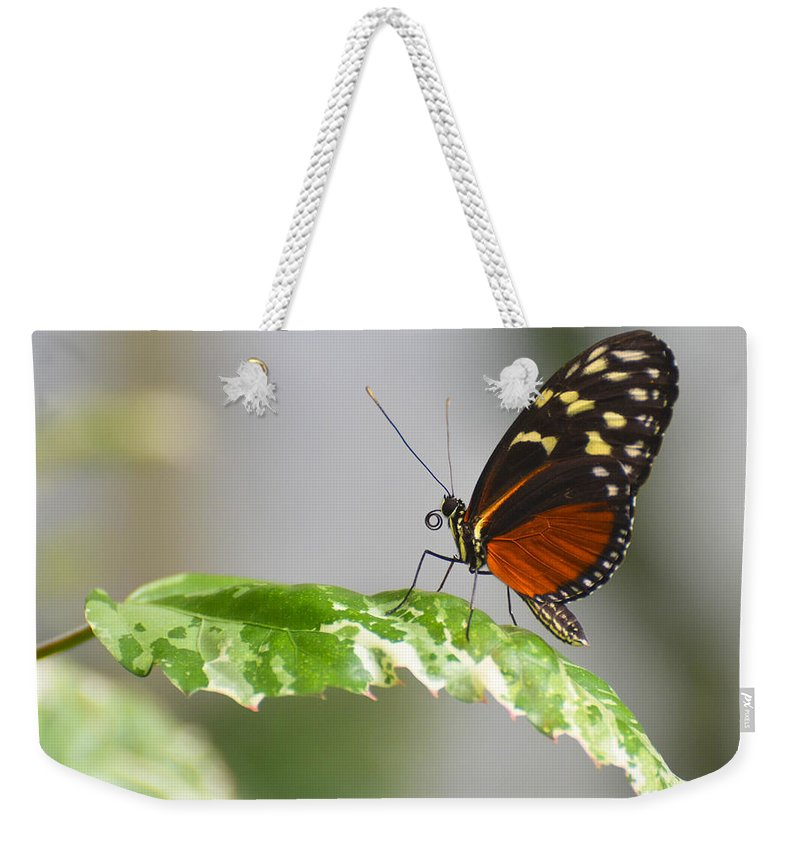Heliconius Weekender Tote Bag featuring the photograph Heliconius Butterfly On Green Leaf by Michael Moriarty