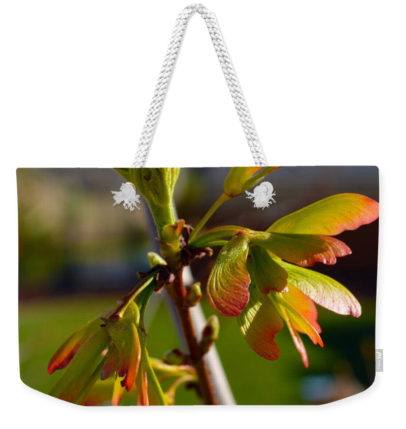 Seeds Weekender Tote Bag featuring the photograph Helicopter Seeds 2 by Brent Dolliver