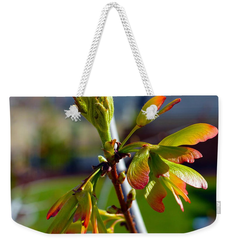 Seeds Weekender Tote Bag featuring the photograph Helicopter Seeds by Brent Dolliver