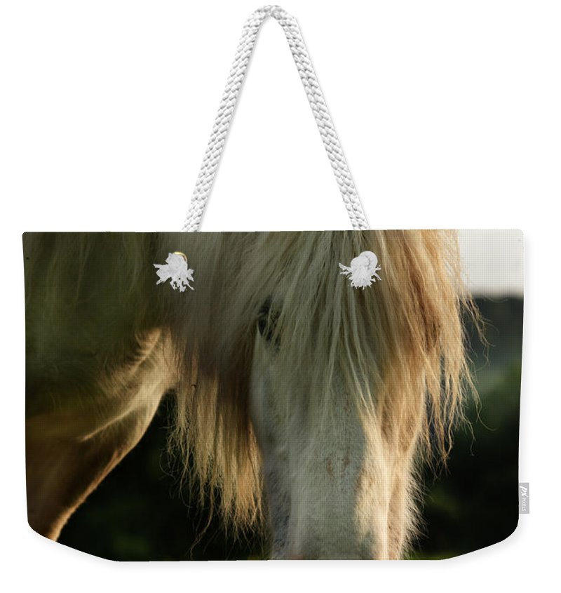 Grey Horse Weekender Tote Bag featuring the photograph Hello Mate by Angel Ciesniarska