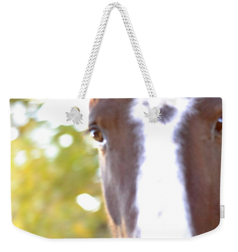 Horse Weekender Tote Bag featuring the photograph Hello by Pam Romjue
