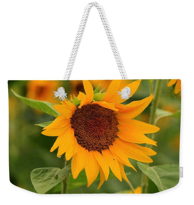 Sunflowers Weekender Tote Bag featuring the photograph Hello There by Amy Warr