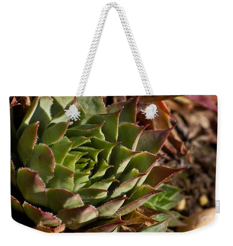 Sedum Weekender Tote Bag featuring the photograph Hens And Chicks Sedum 1 by Douglas Barnett