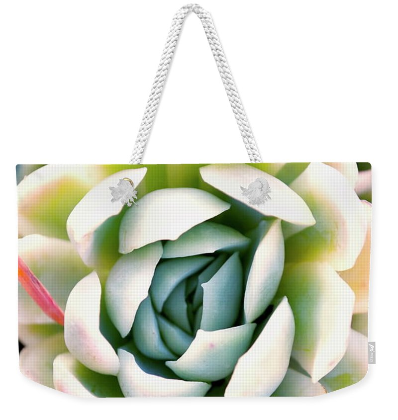 Scenics Weekender Tote Bag featuring the photograph Hens And Chicks Succulent In Soft Focus by Lazingbee