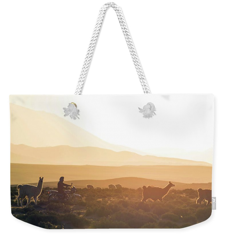 Photography Weekender Tote Bag featuring the photograph Herd Of Llamas Lama Glama In A Desert by Panoramic Images