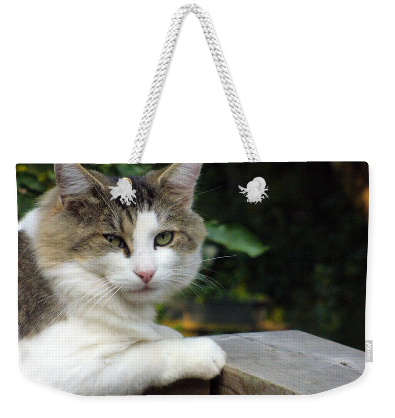 Cat Photography Weekender Tote Bag featuring the photograph Here Is Looking At You by Lingfai Leung