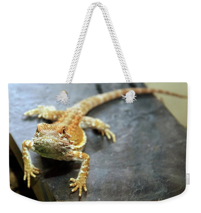Lizard Weekender Tote Bag featuring the photograph Here Lizard Lizard by Andee Design