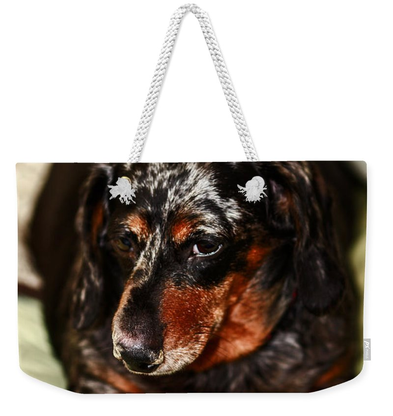 Wierner Dog Weekender Tote Bag featuring the photograph Heres Lookin At You by Stephen Brown