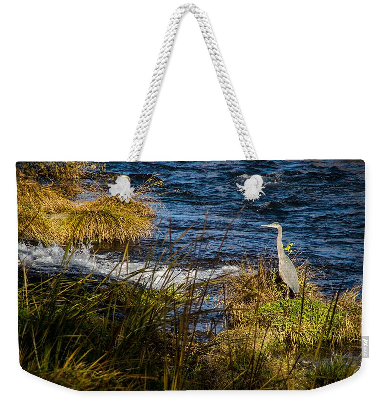 Wildlife Weekender Tote Bag featuring the photograph Heron Watchful Eye by Mick Anderson