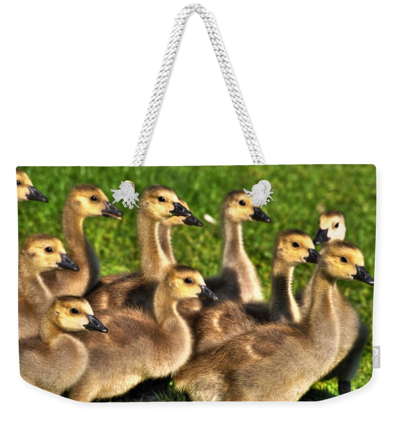 Babies Weekender Tote Bag featuring the photograph Hey...hey...i Said Single File Line by Michael Frank Jr