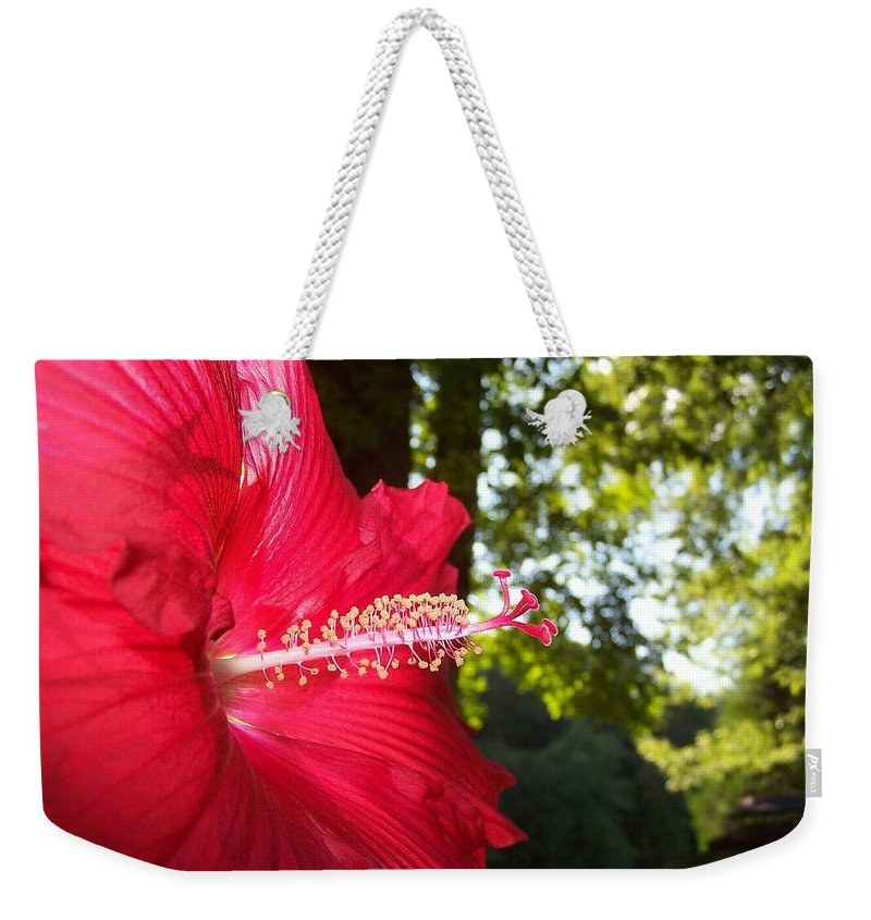 Hibiscus Weekender Tote Bag featuring the photograph Hibiscus - Lord Baltimore by Holly Eads
