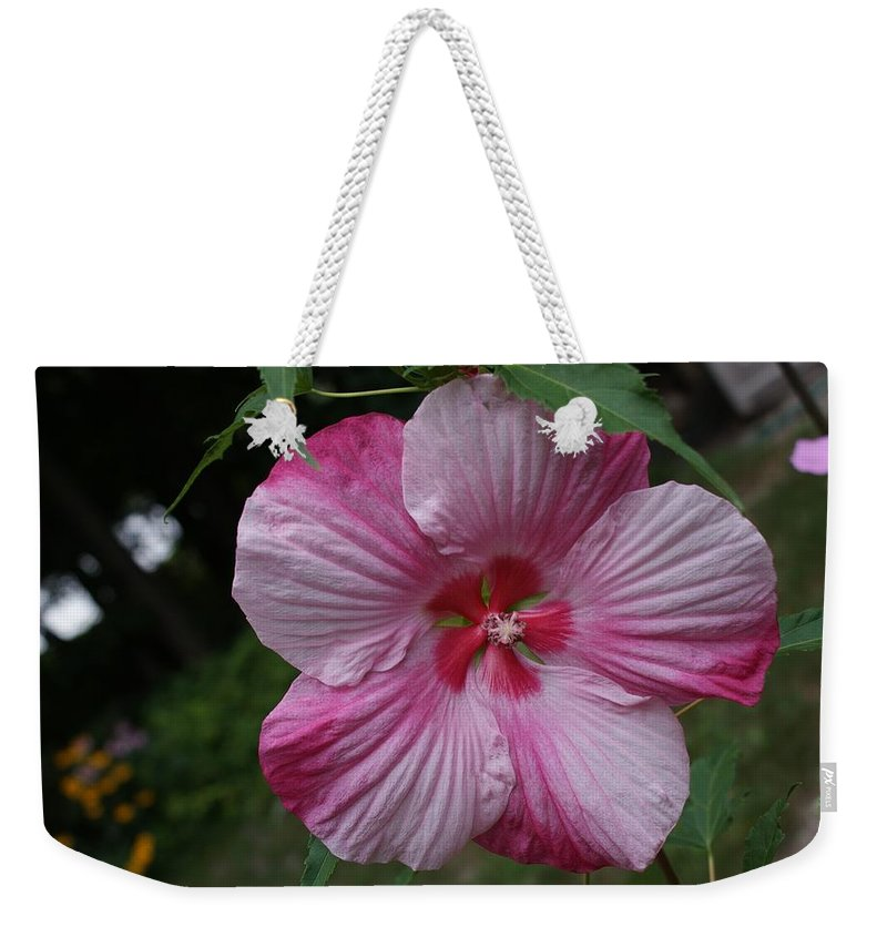 Hibiscus Weekender Tote Bag featuring the photograph Hibiscus - Turn Of The Century by Holly Eads