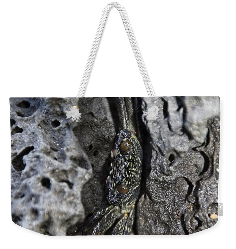 Crab Weekender Tote Bag featuring the photograph Hidden by Douglas Barnard