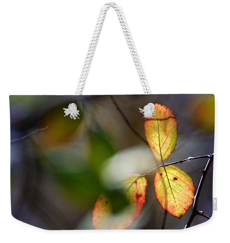 Landscape Weekender Tote Bag featuring the photograph Hidden Forest Leaves by Guido Montanes Castillo