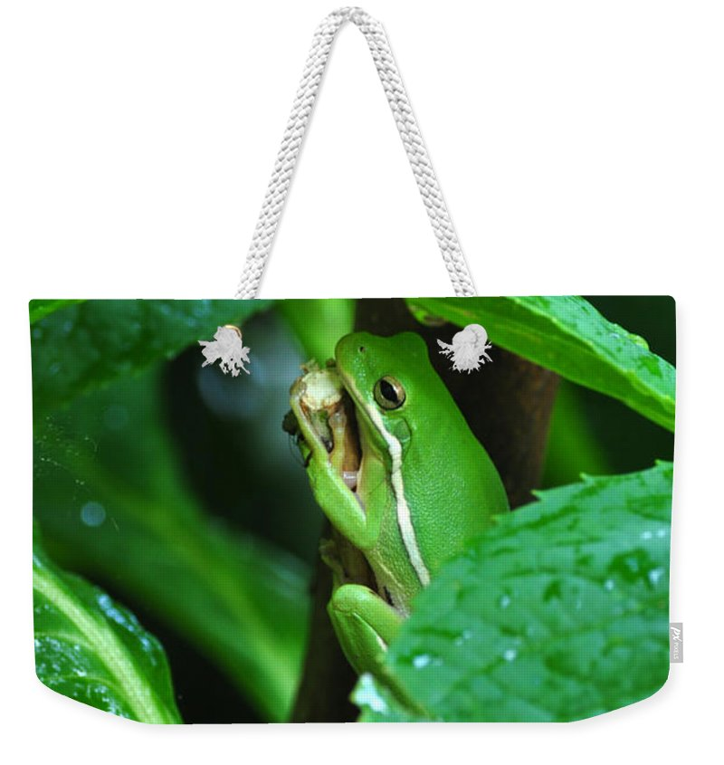 Frog Weekender Tote Bag featuring the photograph Hideout by Gail Butler