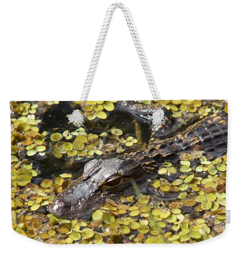 Alligator Weekender Tote Bag featuring the photograph Hiding Alligator by Larry Allan
