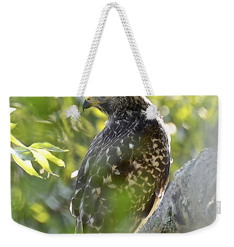 Hawk Weekender Tote Bag featuring the photograph Hiding In Plain Sight by Carol Bradley