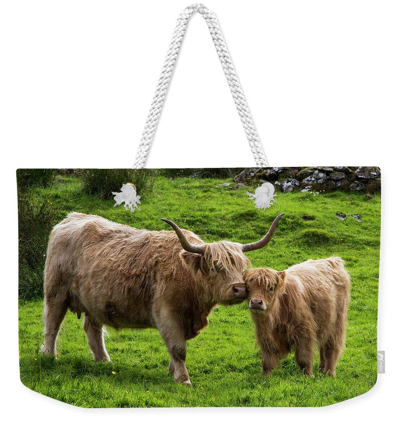 Horned Weekender Tote Bag featuring the photograph Highland Cattle And Calf by John Short / Design Pics
