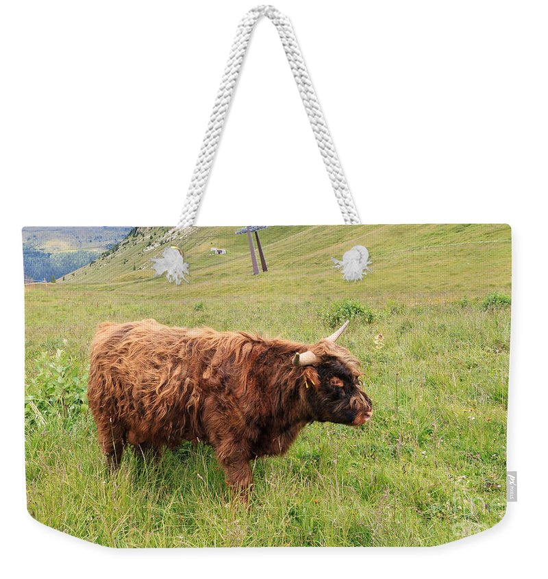 Agriculture Weekender Tote Bag featuring the photograph Highland Caw by Antonio Scarpi