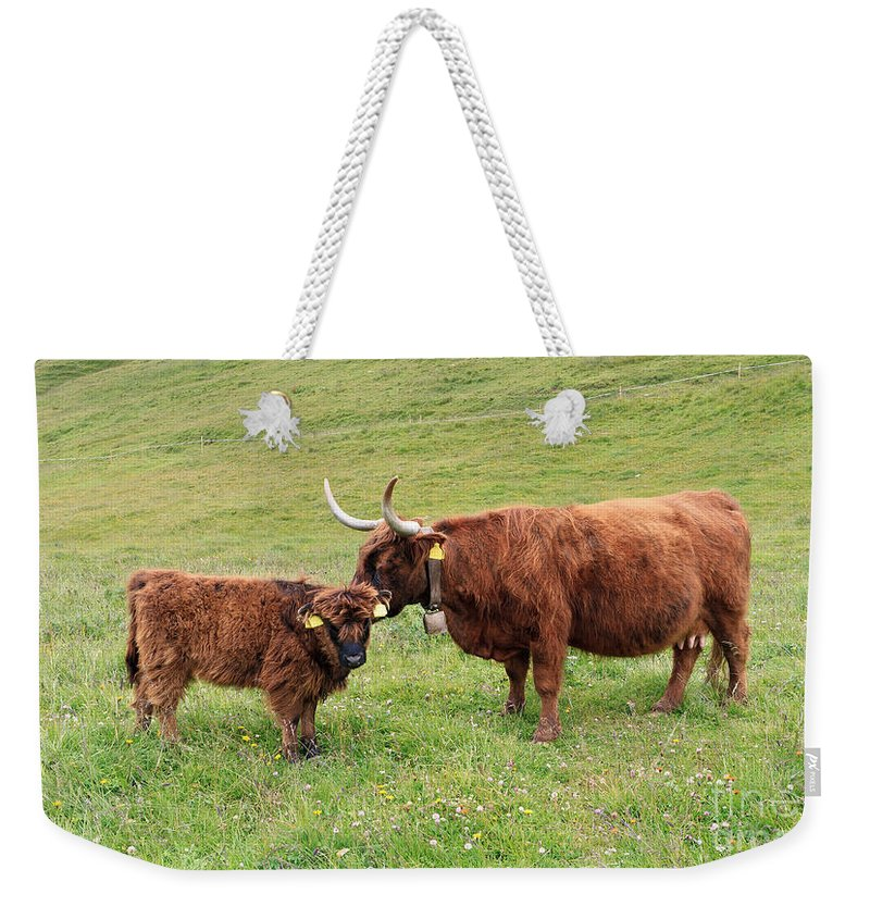 Agriculture Weekender Tote Bag featuring the photograph Highland Caws by Antonio Scarpi