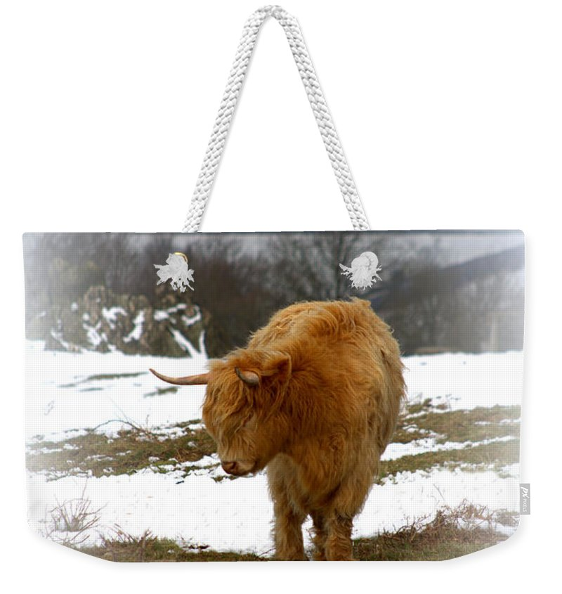 Hair Weekender Tote Bag featuring the photograph Highland Cow by Linsey Williams