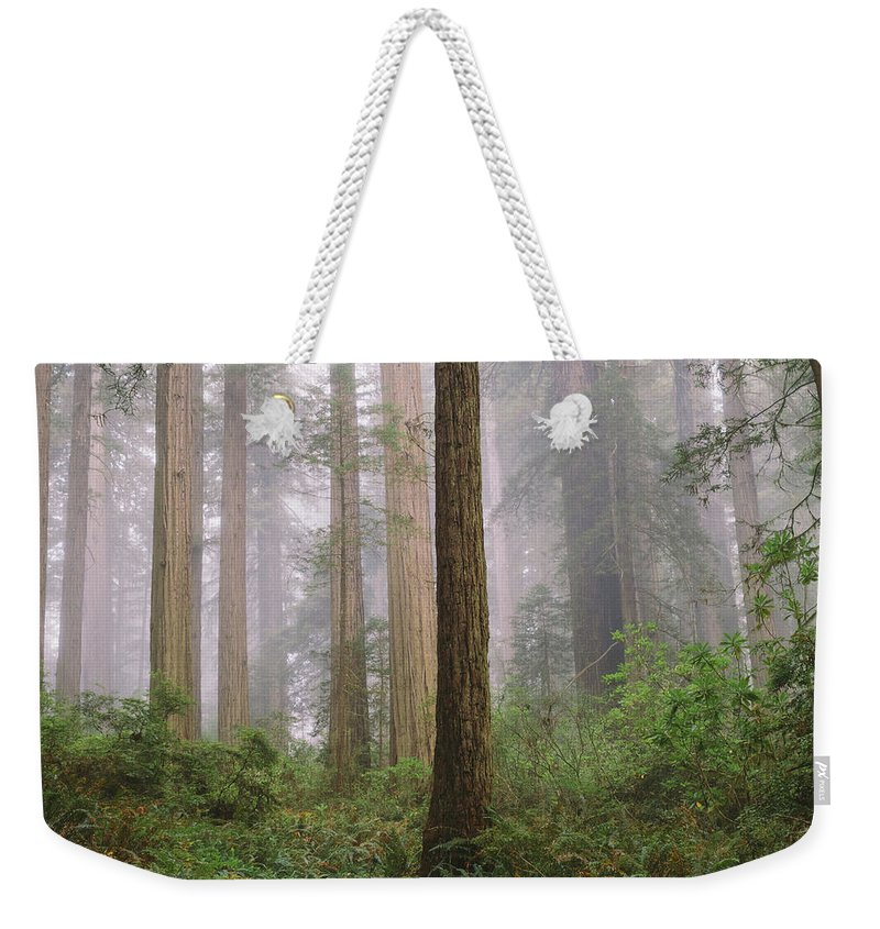 Tranquility Weekender Tote Bag featuring the photograph Hiking Through Californias Redwoods by David Hoefler