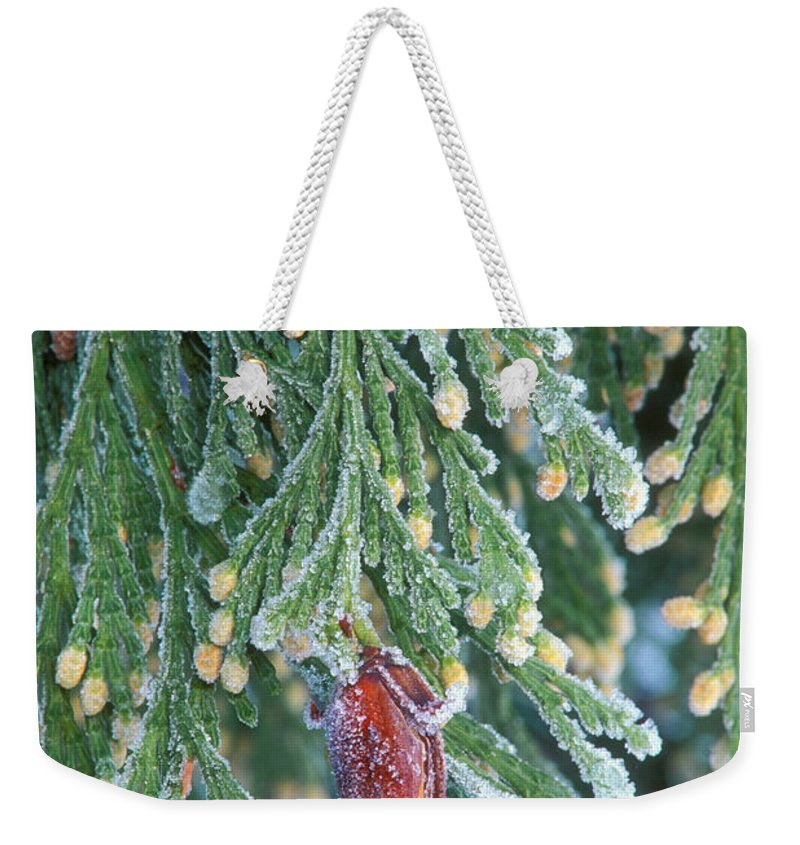 North America Weekender Tote Bag featuring the photograph Hoarfrost On Pine Bough Yosemite National Park by Dave Welling