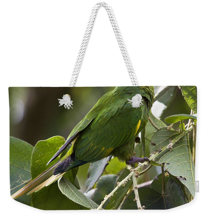 Parrot Weekender Tote Bag featuring the photograph Hoffman's Conure by Heiko Koehrer-Wagner