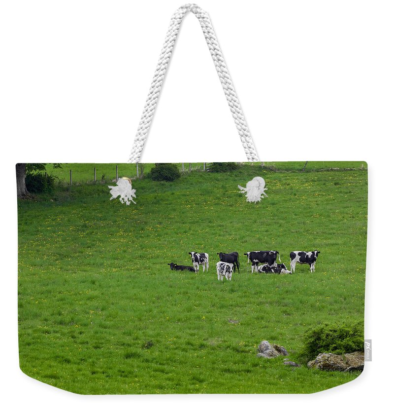 Cow Weekender Tote Bag featuring the photograph Holsteins by Bill Wakeley