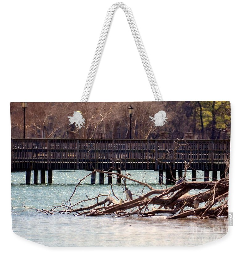 Home Of The Black-crowned Night Heron Weekender Tote Bag featuring the photograph Home Of The Black-crowned Night Heron by Maria Urso