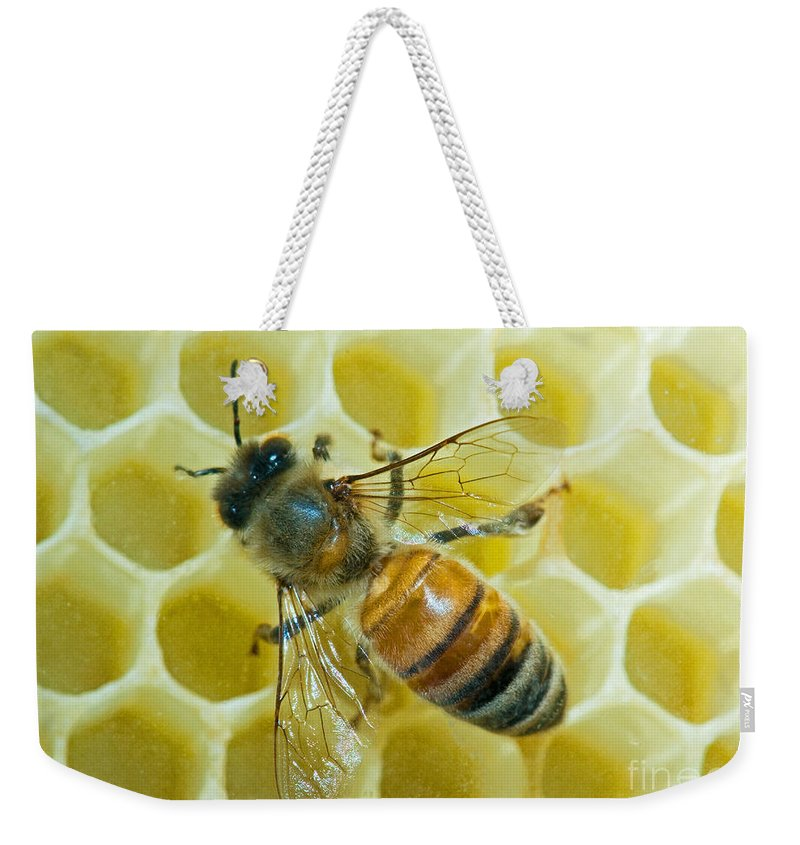 Insect Weekender Tote Bag featuring the photograph Honey Bee In Hive by Millard H. Sharp