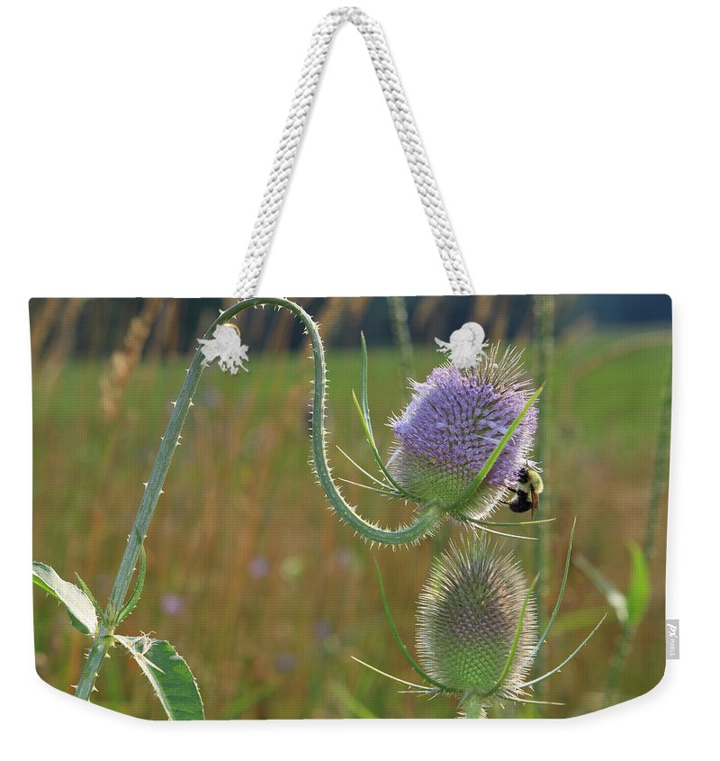 Bee Weekender Tote Bag featuring the photograph Honey Bee Picks Up Pollen by John Lan